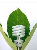 stock photo of light-bulb  - A compact fluorescent lamp presented as a flower surrounded by leaves - JPG