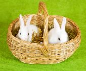 image of tawdry  - Two white rabbits in basket against tinsel on green - JPG