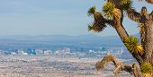 picture of strip  - Joshua Tree and the Las Vegas Strip - JPG