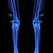 stock photo of thighs  - The knee joint joins the thigh with the leg and consists of two articulations - JPG