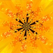 stock photo of symmetrical  - Yellow Flower Center Symmetric Collage Made of Collection of Various Wildflowers - JPG
