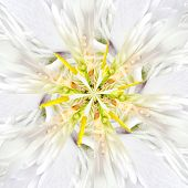 pic of symmetrical  - White Flower Center Symmetric Collage Made of Collection of Various Wildflowers - JPG