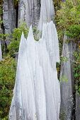 picture of gunung  - limestone pinnacles formation at gunung mulu national park borneo malaysia - JPG