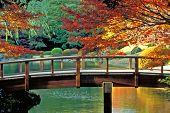 Постер, плакат: Классический японский сад Токио Япония