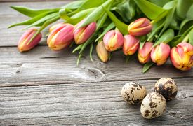pic of quail egg  - Easter eggs and fresh spring tulips on weathered wooden background - JPG