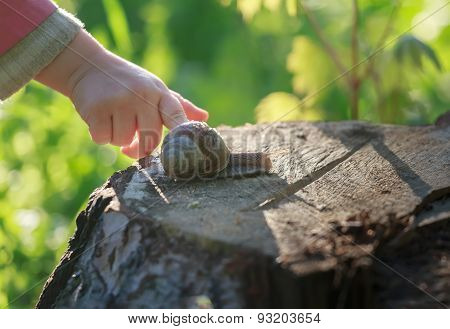 Preschooler Child Arm Touching Crawling On Tree Stump Edible Snail