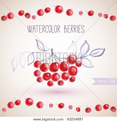 watercolor branches rowan berry. food vector illustration