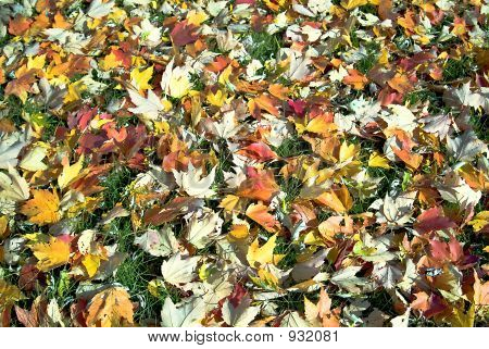 Floor Of Fallen Leaves