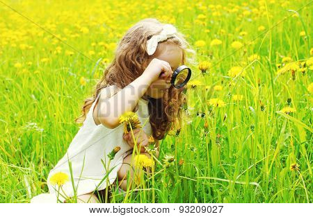 Little Girl Child Looking Through A Magnifying Glass On Yellow Dandelion Flowers