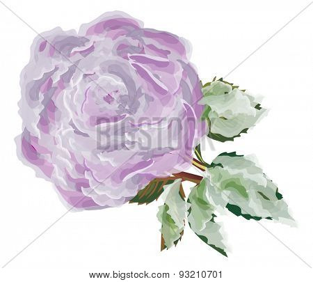 illustration with single lilac rose flower isolated on white background