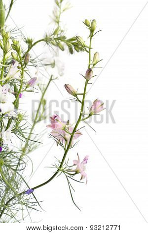 Delphinium Flowers On Light Background