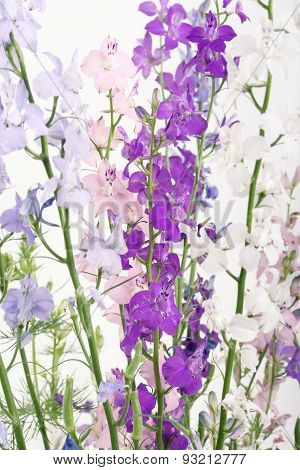 Colorful Delphinium Flowers