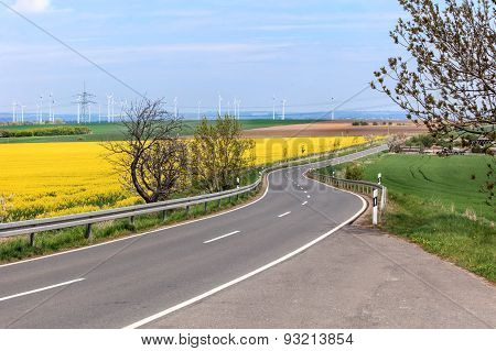 Landscape with rapeseed flower field.