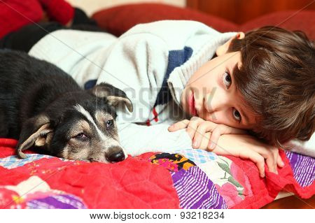 Preteen Handsome Boy And Shepherd Puppy