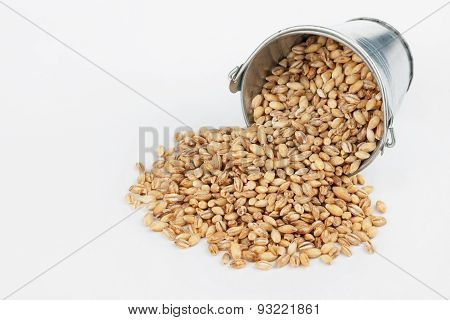 Pearl Barley Grains Spilling Out Of Bucket