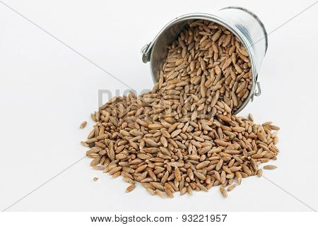 Rye Grains Spilling Out Of Bucket
