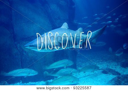 discover against shark swimming in fish tank