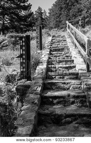 Forest Stone Stairs