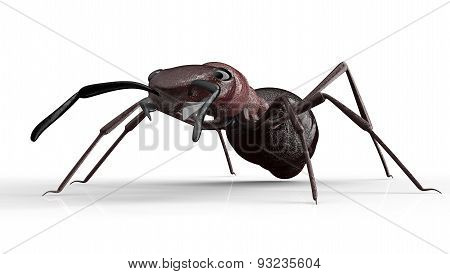 Black Ant Isolated On A White Background