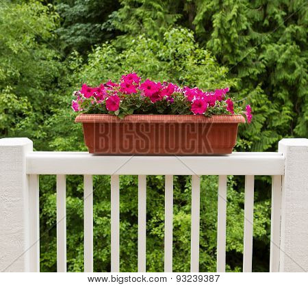 Colorful Flowers In Bloom On White Patio Railing