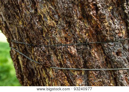Tree Tied Wire