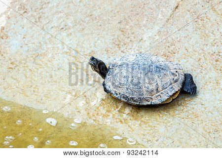Turtle Or Tortoise On Stone Shore