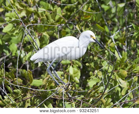 White heron on a tree . Close up in a sunny day