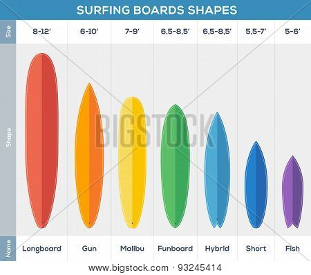 Surfing boards types vector infographic