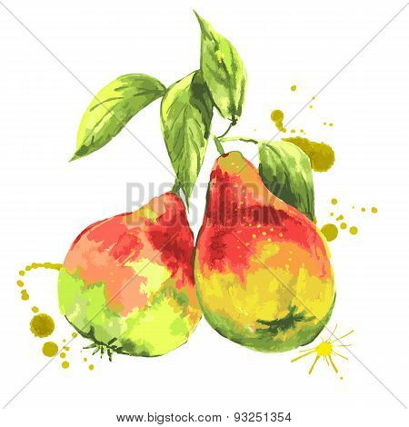 Watercolor pears, summer hand drawn fruit