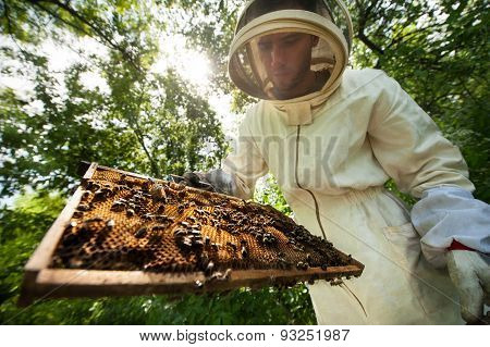 beekeeper with a frame full of bees