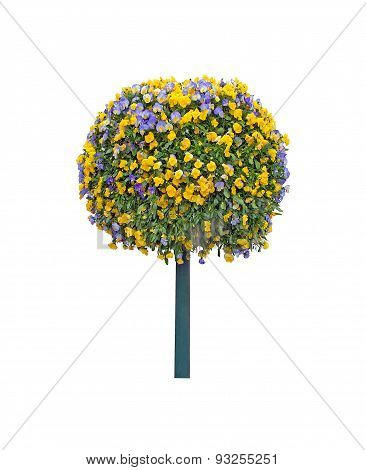 Tree with pansy flowers isolated