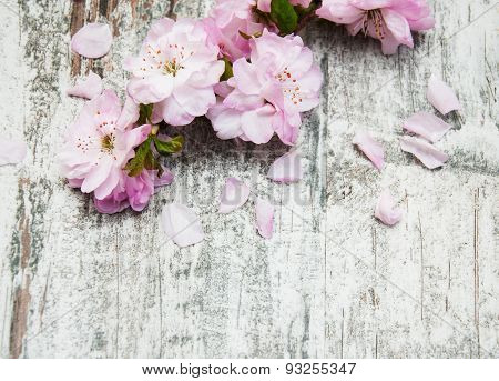 Sakura Blossom On A Old Wooden Background