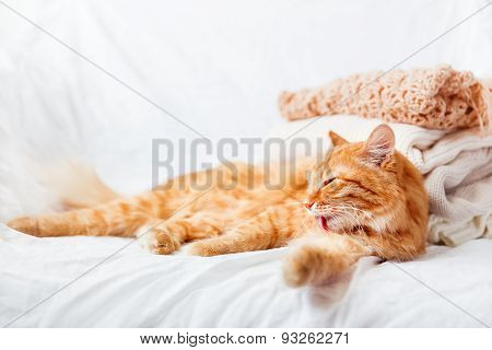 Ginger Cat  Lies Near A Pile Of Beige Woolen Clothes On A White Background.