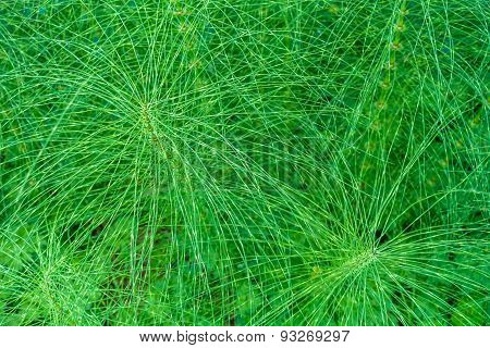 Wiry Plant Closeup