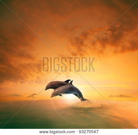 Couples Of Sea Dolphin Jumping Through Ocean Wave Floating Mid Air Against Beautiful Sun Set Sky
