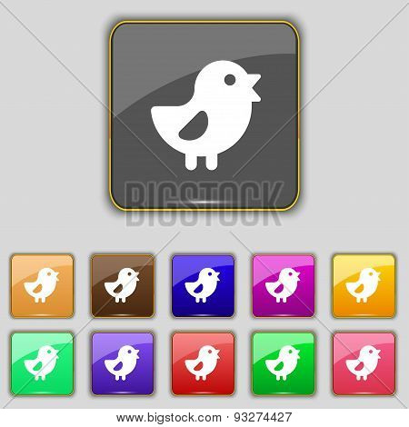 Chicken, Bird Icon Sign. Set With Eleven Colored Buttons For Your Site. Vector