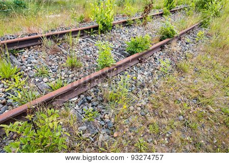 Unused Train Rails Overgrown With Wild Plants