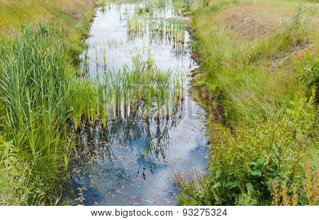 Ditch With Reeds And Water Plants