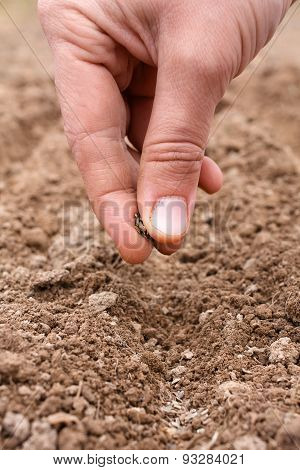 Hand Planting Seeds In Soil