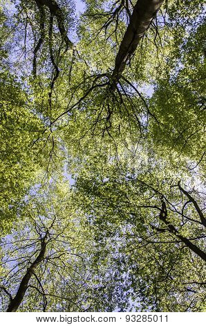 Treetop Canopy Background