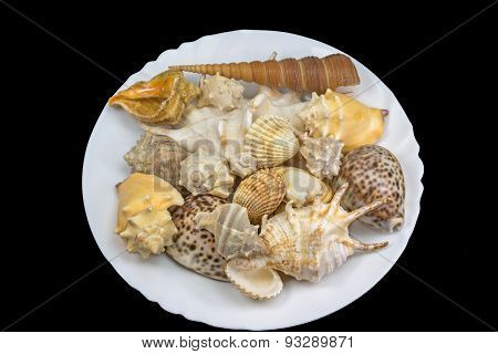 Seashells Lying In The White Plate. Isolated.