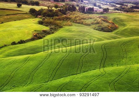 Beautiful Rural Landscape With The Green Field, Tuscany. Italy