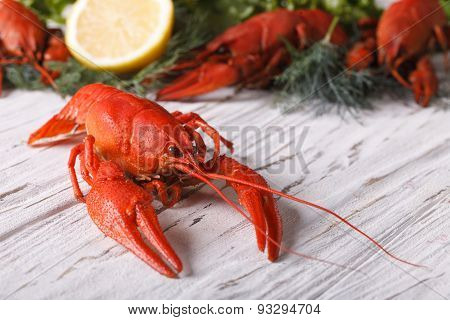 Boiled Crayfish On A Table Close Up. Horizontal