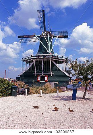 Windmill and ducks, Zaanse Schans.