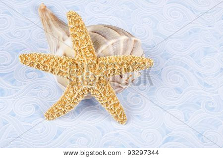Starfish and Lightning Whelk Shell