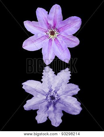 Clematis Flower On Water