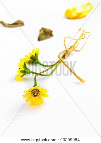 The Flower Grass On Whit Isolate Background.