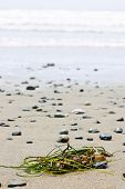 foto of pacific rim  - Seaweed on sand Long Beach in Pacific Rim National Park Canada - JPG