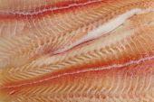 pic of pangasius  - Pangasius fillets of raw fish  - JPG