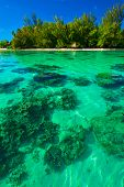 stock photo of french polynesia  - Underwater coral reef next to green tropical island on Moorea - JPG